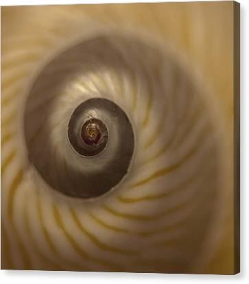 Sanibel Island Canvas Print - Golden Moon Shell by Carol Leigh