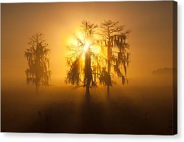Golden Morning Canvas Print by Claudia Domenig