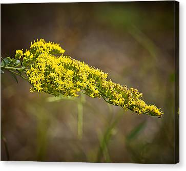 Golden Number One Canvas Print by Michael Putnam