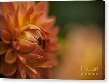 Golden Orange Glow Canvas Print by Mike Reid