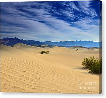 Golden Sand Dunes Death Valley National Park Canvas Print