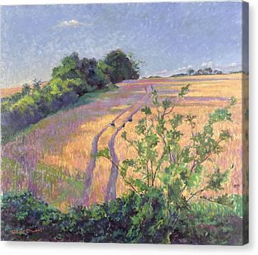 Golden Summer Canvas Print