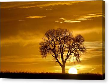 Golden Sunrise Silhouette Canvas Print by James BO  Insogna
