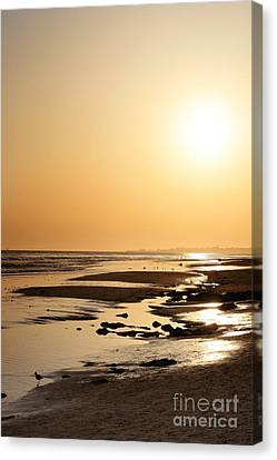Golden Sunset- California Coast Canvas Print