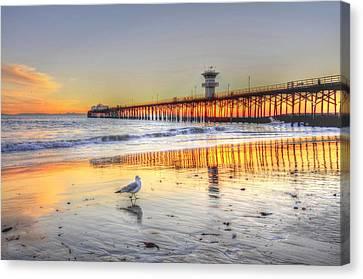 Golden Sunset With Bird Canvas Print
