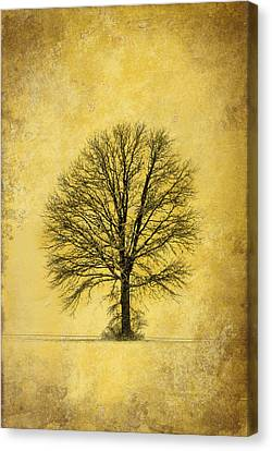 Canvas Print featuring the photograph Golden Tree by Mary Timman
