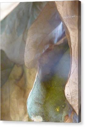 Golden Vistas Canvas Print