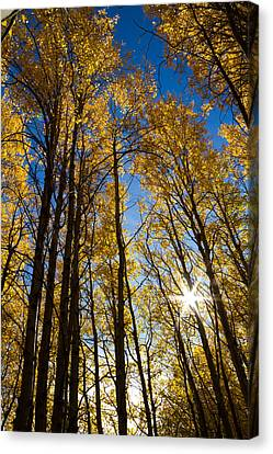 Canvas Print featuring the photograph Golden Whispers by Randy Wood