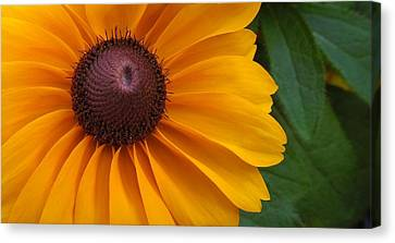 Goldilocks  Flower Canvas Print by Chad and Stacey Hall