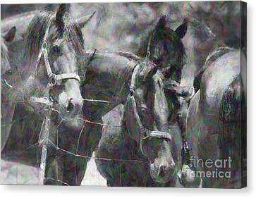 Good Impression Canvas Print