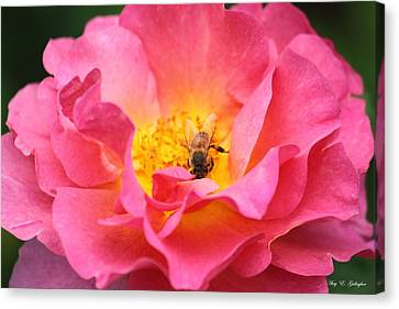 Canvas Print featuring the photograph Good Morning  by Amy Gallagher