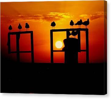 Goodnight Gulls Canvas Print by Karen Wiles