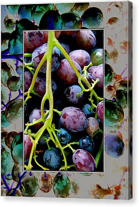 Gorgeous Bunch Of Grapes Canvas Print by John Maloof