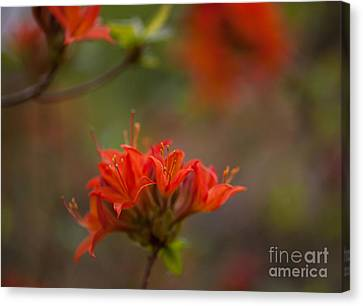 Gorgeous Cluster Canvas Print by Mike Reid