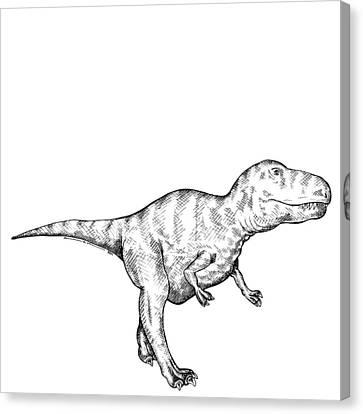 Gorgosaurus - Dinosaur Canvas Print by Karl Addison