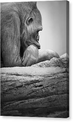 Gorilla Resting Canvas Print by Darren Greenwood
