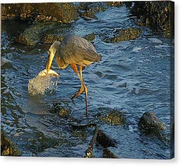 Canvas Print featuring the photograph Gotcha by Brian Wright