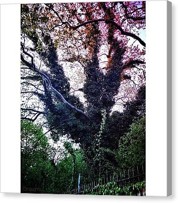 Gmy Canvas Print - Gothic Tree On Admiral's Row by Natasha Marco