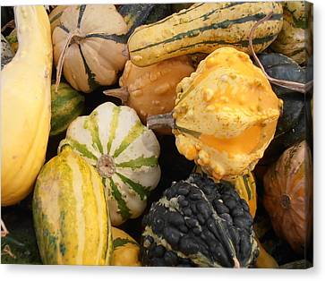 Farm Stand Canvas Print - Gourds by Kimberly Perry
