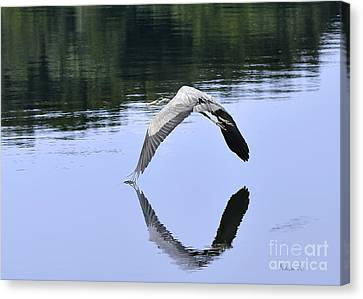 Canvas Print featuring the photograph Graceful Heron by Nava Thompson