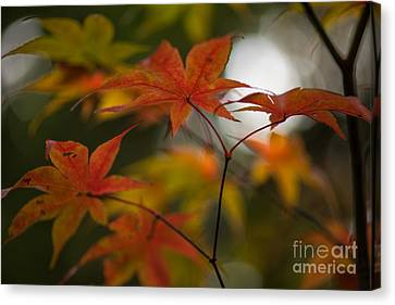 Red Leaf Canvas Print - Graceful Layers by Mike Reid