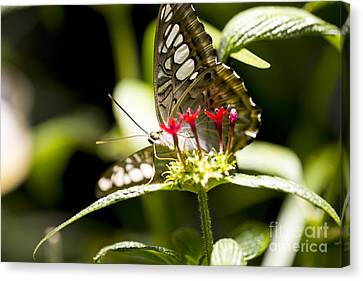 Graceful Canvas Print by Leslie Leda