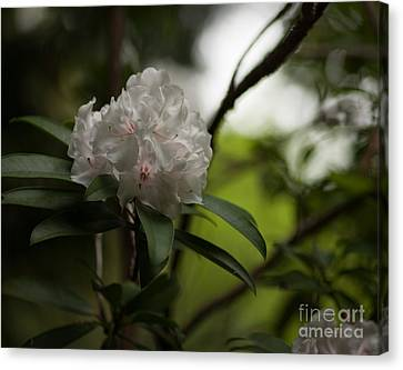 Gracefully Lit Canvas Print by Mike Reid