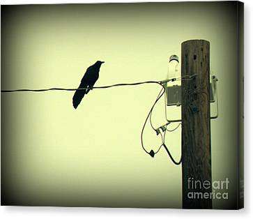 Grackle Au Vignette Canvas Print by Joe Jake Pratt