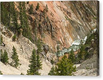 Grand Canyon And Yellowstone River Canvas Print by Living Color Photography Lorraine Lynch