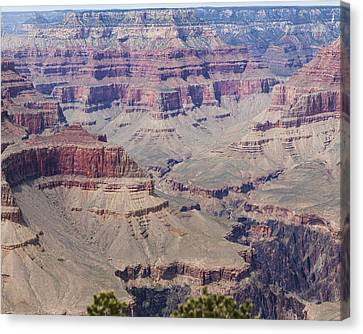 Grand Canyon Colorado River Page 7 Of 8 Canvas Print by Gregory Scott
