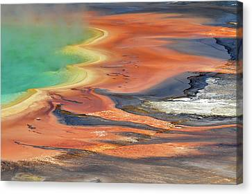 Grand Prismatic Spring Runoff Canvas Print by Photo by Mark Willocks