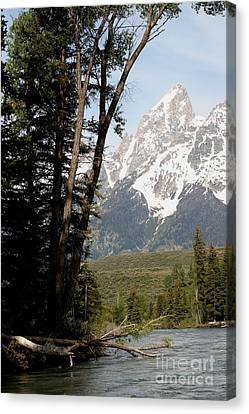 Grand Tetons Vertical Canvas Print by Living Color Photography Lorraine Lynch