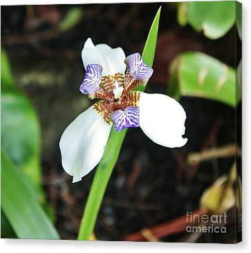 Grande Iris Canvas Print by Craig Wood