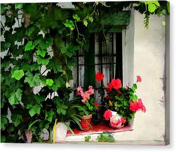 Grape Vines An Geraniums Frame A Window Canvas Print by Elaine Plesser