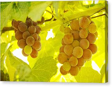 Grapes A Fine Art Photography Print And Canvas Art Canvas Print by James BO  Insogna
