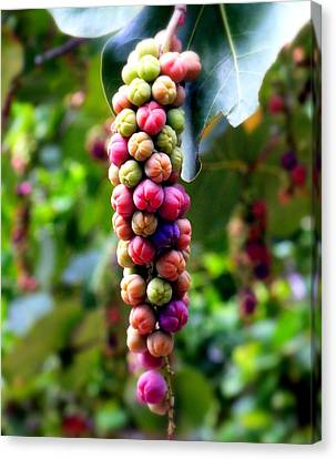 Grapes By The Sea Canvas Print by Karen Wiles