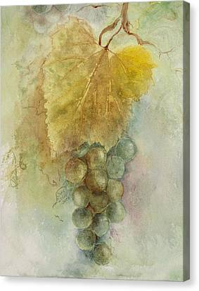 Grapes IIi Canvas Print by Judy Dodds