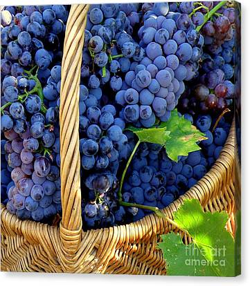 Grapes In A Basket Canvas Print by Lainie Wrightson