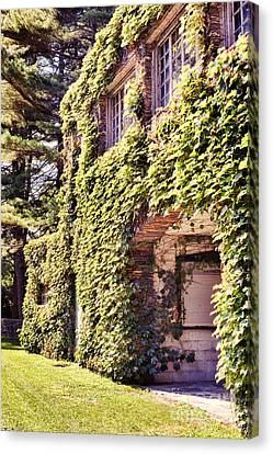 Grapevine Covered Building Canvas Print