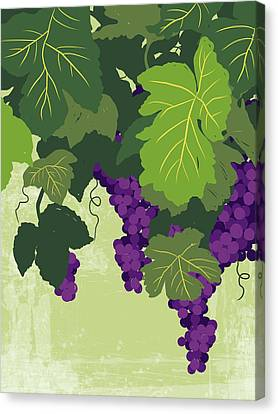 Graphic Illustration Of Wine Grapes On The Vine Canvas Print