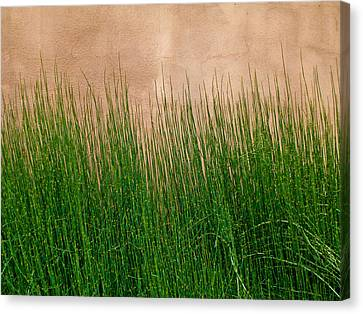 Canvas Print featuring the photograph Grass And Stucco by David Pantuso