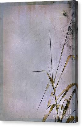 Grass And Wall Canvas Print by Judi Bagwell