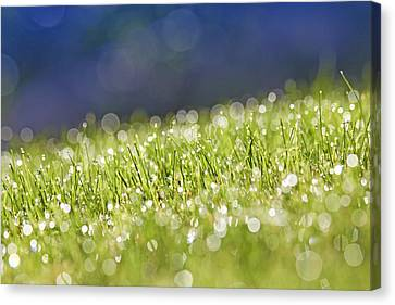 Grass, Close-up Canvas Print by Tony Cordoza