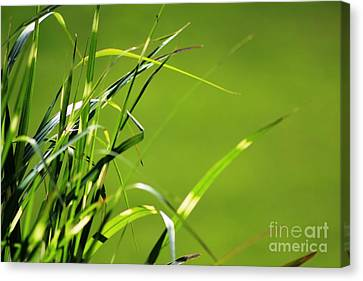 Grass Is Always Greener Canvas Print