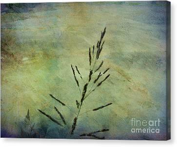 Grass Stem Canvas Print by Judi Bagwell