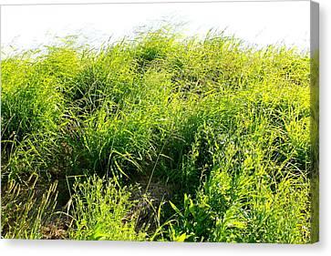 grass. WILD GRASS Canvas Print by Michael Clarke JP