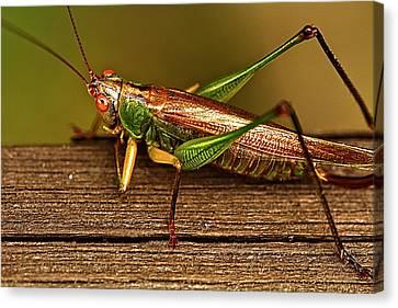 Grasshopper Canvas Print by Linda Tiepelman