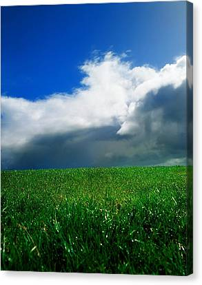 Grassy Field, Ireland Canvas Print by The Irish Image Collection