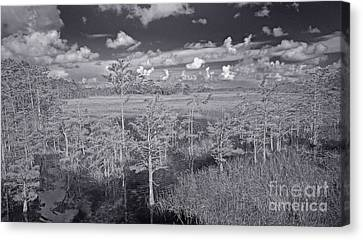 Canvas Print featuring the photograph Grassy Waters 3 Bw by Larry Nieland