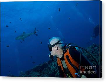 Gray Reef Shark With Diver, Papua New Canvas Print by Steve Jones